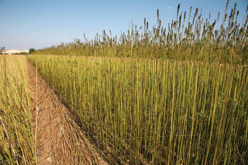 Isolant innovant issu de l'agriculture 100% français
