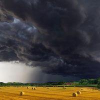 Quelques conseils utiles pour acheter un terrain agricole