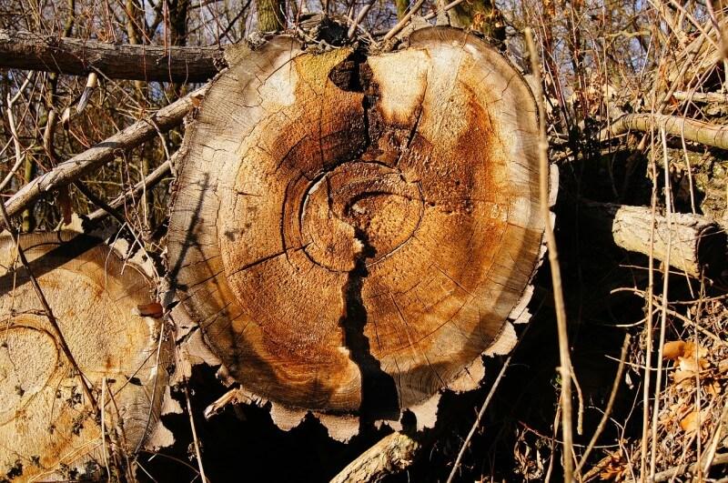 Utilisation du bois dans le domaine de la construction